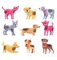 dogs of different breeds icons vector image vector image