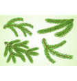 set fir or pine tree branches vector image