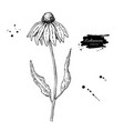 calendula drawing isolated medical flower vector image vector image