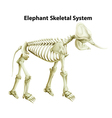 Skeletal System of an Elephant vector image vector image