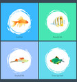 gold fish and green tiger barb vector image vector image
