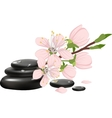 Spa background with cherry blossoms
