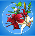 painted red and white lilies on a blue background vector image vector image