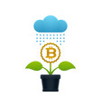 raining on the flower with bitcoin vector image
