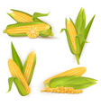 realistic sweet corn set isolated vector image