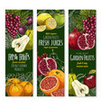 sketch banners tropical exotic fruits vector image vector image
