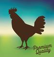 fresh chicken vector image