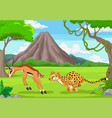 cheetah is chasing an impala in an african vector image vector image