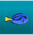 regal blue tang cartoon pic vector image