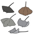 set of ray fish vector image