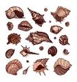 collection seashells vector image vector image