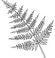 fern bright cartoon vector image
