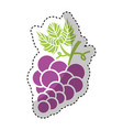 grapes fruit isolated icon vector image