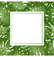 philodendron monstera leaf banner card copy space vector image vector image