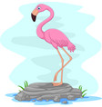 cartoon flamingo standing on rock vector image vector image
