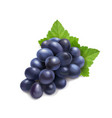 dark red grape branch with green leaf vector image