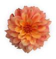 multicolored naturalistic 3d colorful dahlia vector image vector image