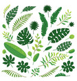 cartoon set tropical leaves isolated vector image vector image