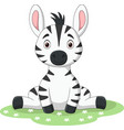 cute bazebra sitting in grass vector image vector image