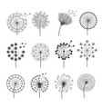 dandelion icon botanical pictures flowers vector image