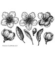set hand drawn black and white peach vector image