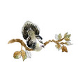 wild exotic bird on branch on white background vector image vector image
