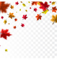 autumn falling leaves background template vector image