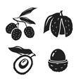 lychee - tropical fruit vector image