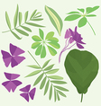 Isolated leaves of potted flowering plants vector image
