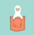 llama alpaca face head inside pocket vector image vector image