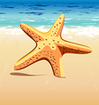 starfish in sand vector image vector image