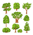 trees and green bushes set isolated on white vector image vector image