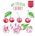 Watercolor cherry elements vector image