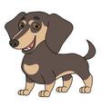 cute dachshund 2 vector image