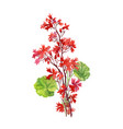 hand drawn branch of red flowers isolated on white vector image vector image