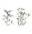 plant handmade doodle vector image vector image