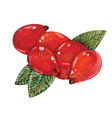 Watercolor Rosehips vector image
