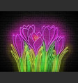 glow bouquet crocuses greeting card template vector image