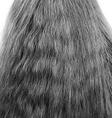 Hair vector image