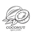 hand drawn coconut icon vector image