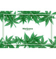 marijuana and cannabis green leaves background vector image vector image