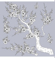 monochrome plum blossom branches vector image vector image