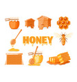 set elements honey concept vector image vector image