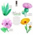 Set of watercolor madicinal plants vector image vector image