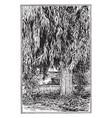 eucalyptus rostrata vintage vector image vector image