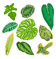 leaves of tropical plants vector image vector image