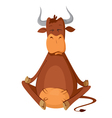 meditating cow vector image