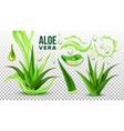 pharmacy succulent aloe vera elements set vector image vector image