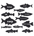 commercial fish silhouettes with names vector image