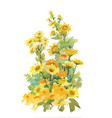 hand drawn yellow flowers isolated on white vector image vector image